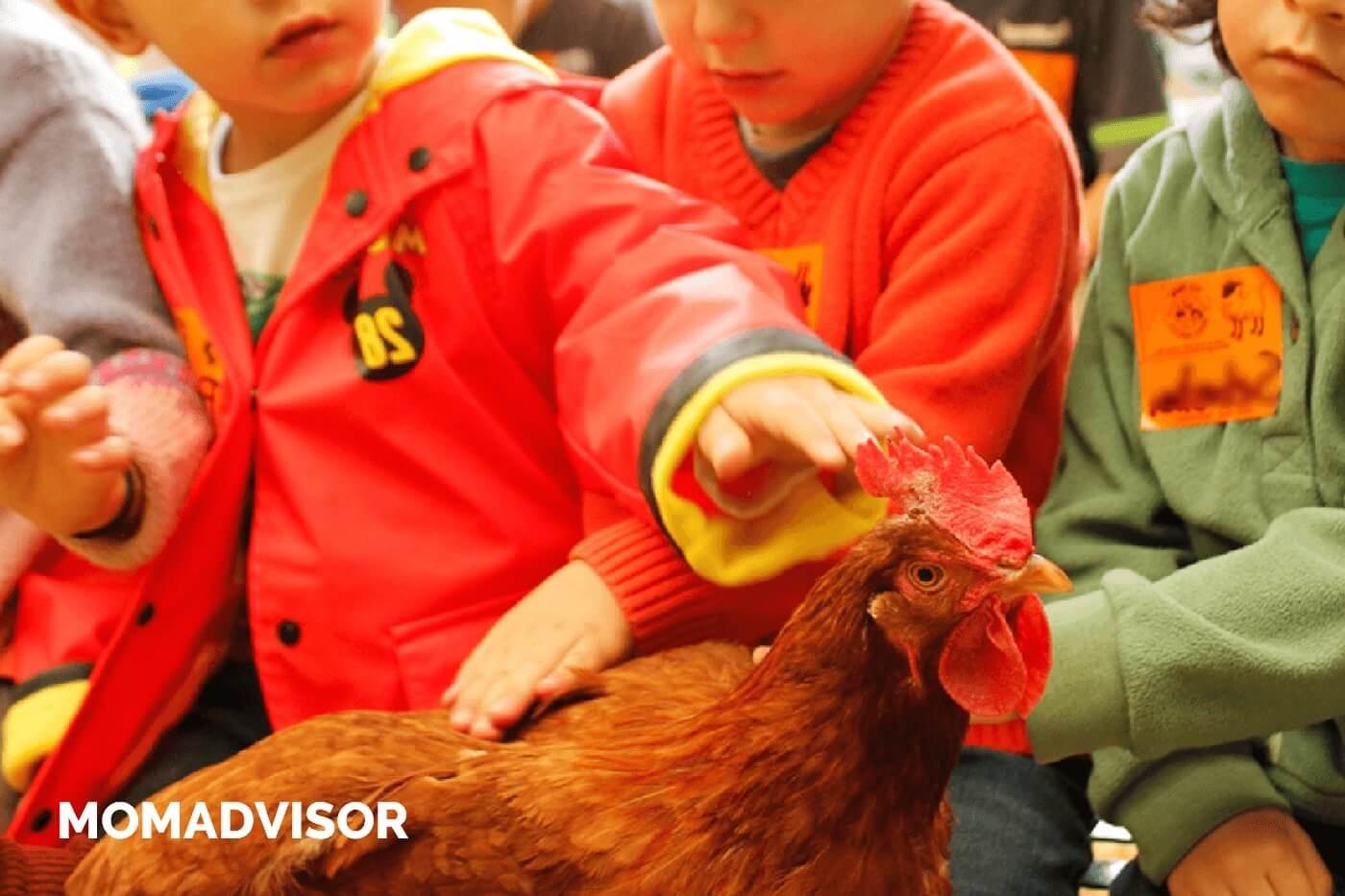 granja_del_tio_pepe_fiestas_tematicas_animales_cdmx_cumpleaños_niños_gallina-1